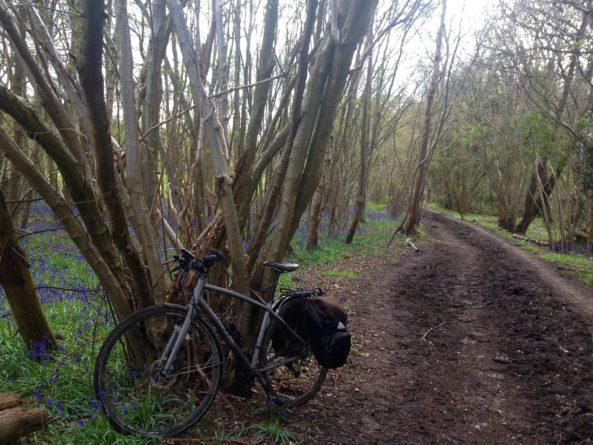 Holt Wood, Chelsham